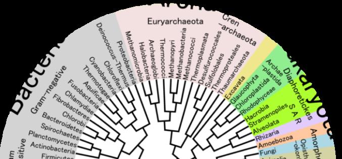 Tirik organizmlar klassifikatsiyasi