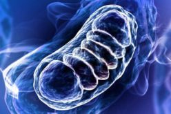 Hujayralarda mitoxondriyalarning soni qancha?