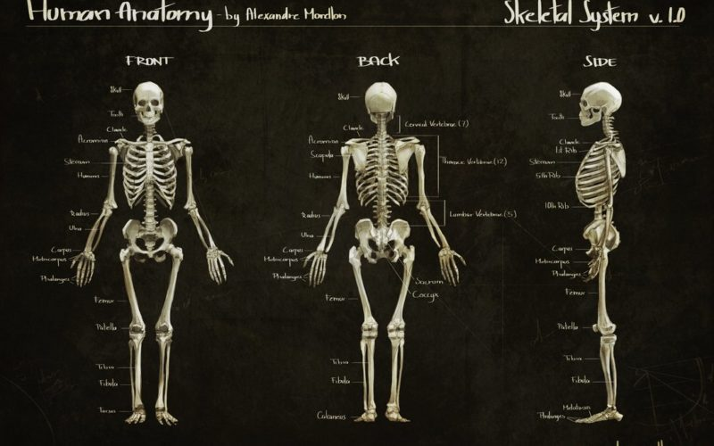 Skelet sistemasi (Suyagi yo'qlar ham o'qisin!)