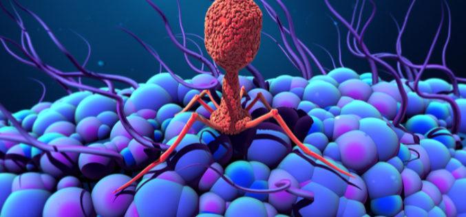 Bakteriyalar o'zini bakteriofaglardan qanday himoya qiladi?